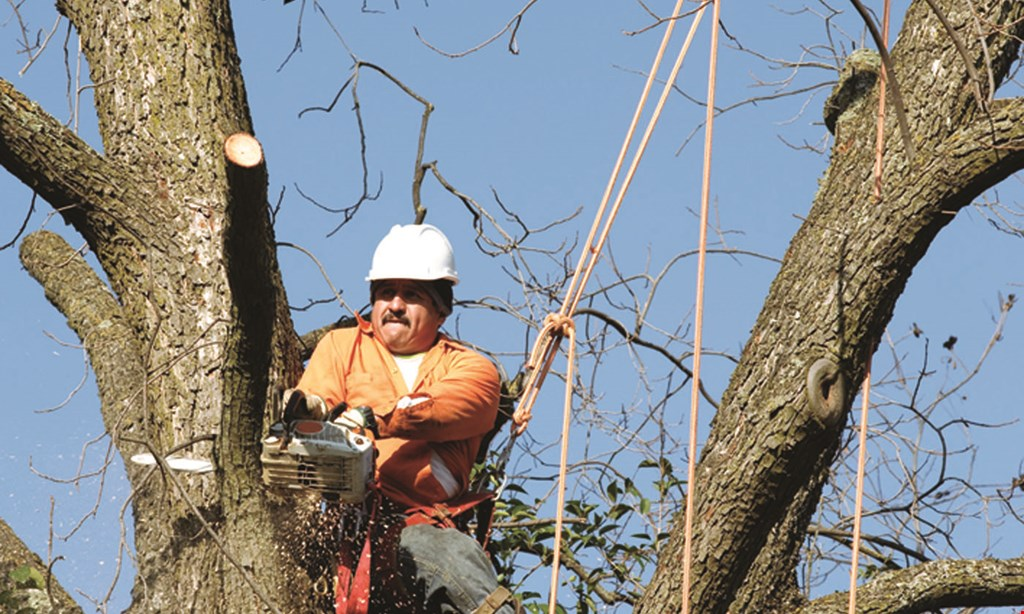 Product image for Shark Tree Service SPRING SPECIAL 20% off any service.