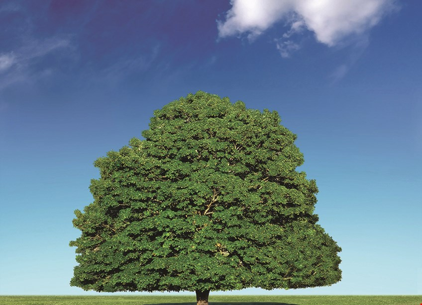 Product image for Total Tree Solutions 10% off any service