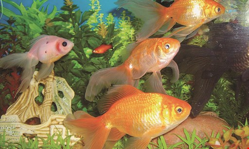 Product image for Pet World free freshwater fish
