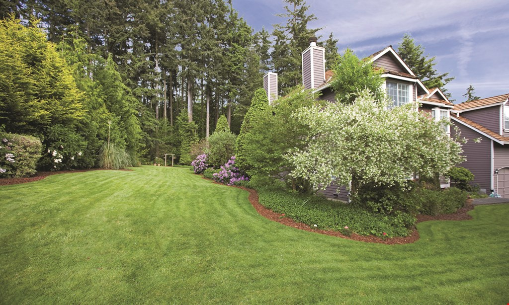 Product image for All Green Lawn & Tree Care, Inc. $25 off grub control application.