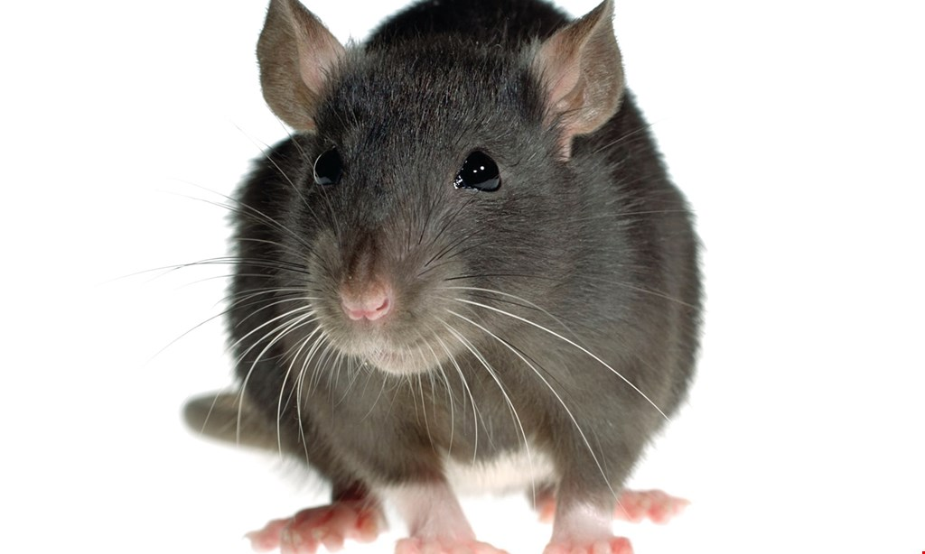 Product image for ABC Pest Management $25 off Full Residential Mice Service.