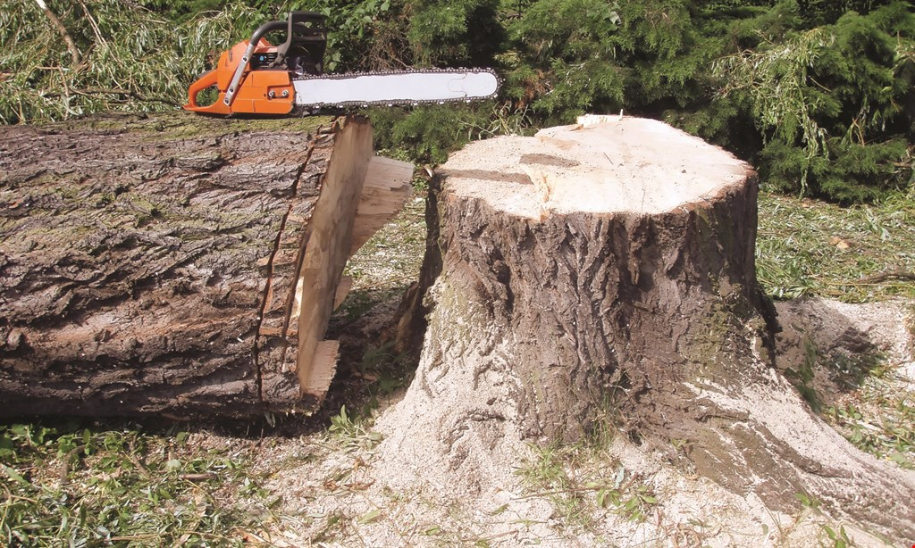 Product image for JT Arborists 10% OFF Tree & Landscape Services Up to $200 Discount. Not valid on Tree Injections, Storm Damage & Stump Grinding.