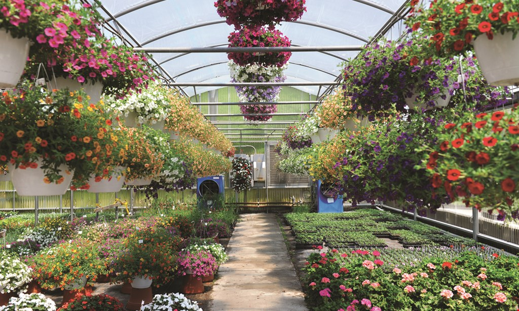 Product image for BALLANTYNE GARDENS FREE Buy 5 perennials Get one free of equal or lesser value.