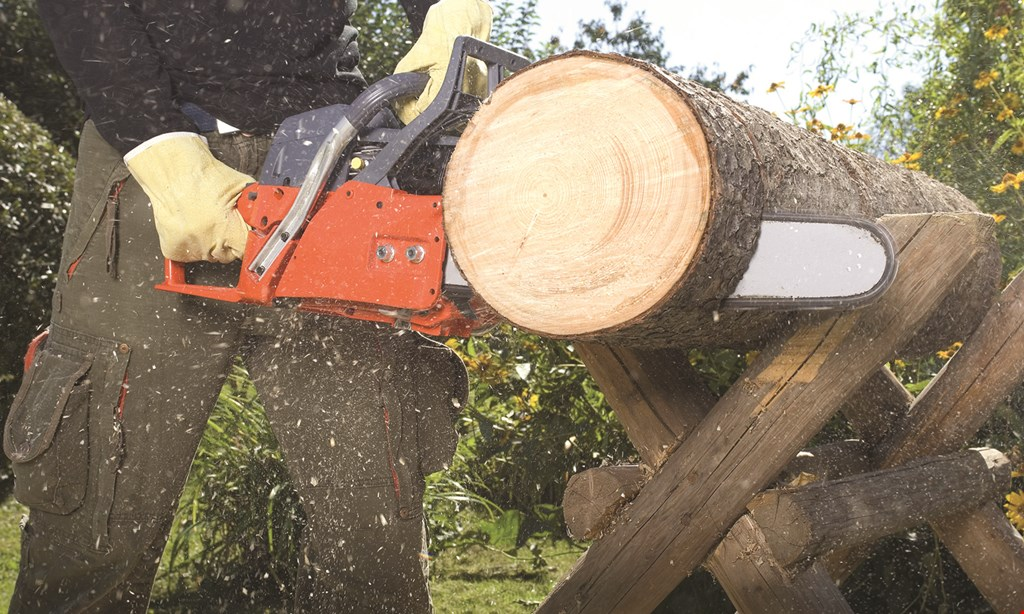 Product image for Gebhard's Logging & Tree Work $100 OFF ANY TREE JOB OR STUMP GRINDING
