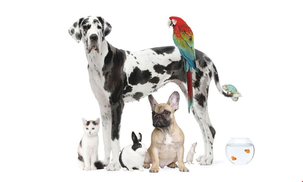 Product image for Ma & Paws Pet Supply Co. FREE Dog and/or Cat Toys Buy 3, Get 1 FREE (must be of equal or lesser value).
