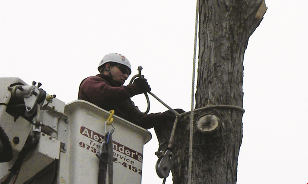 Product image for Alexander's Landscaping & Tree Service 15% OFF tree work.