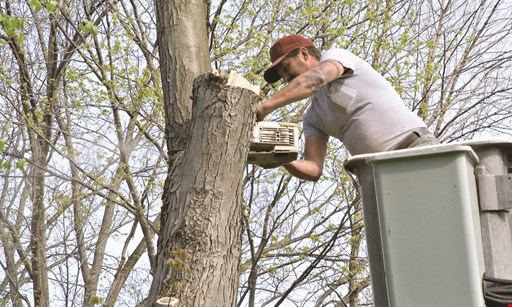 Product image for A Plus Tree Service, Inc 20% off Any Tree Job