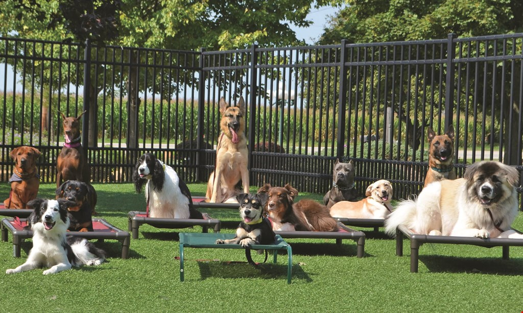 Product image for Kountry Pet Resort & Training Center Free first day of doggie day care