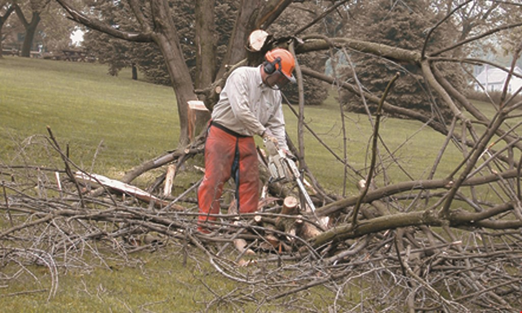 Product image for Wingates Tree Service save $100 on any service