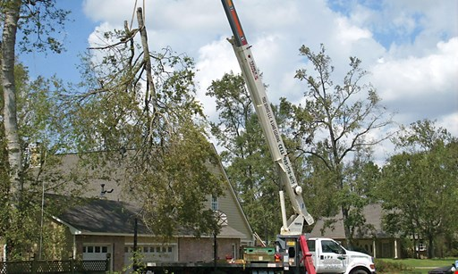 Product image for RPR Tree Service LLC & Tree Trimming $50 OFF any service of $500 or more.