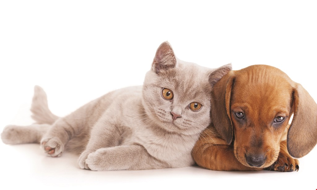 Product image for St. Charles Animal Hospital FREE comprehensive physical exam, dog or cat · $82 value.