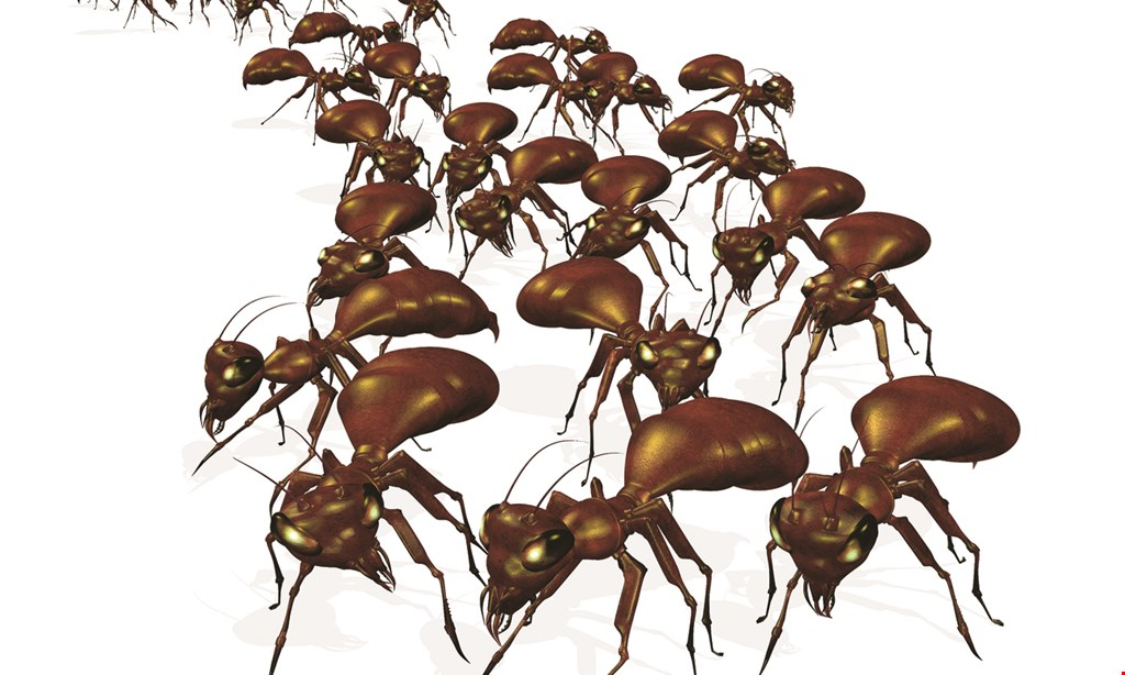 Product image for Tim Mills American Pest Control Co. $20 off initial service call.