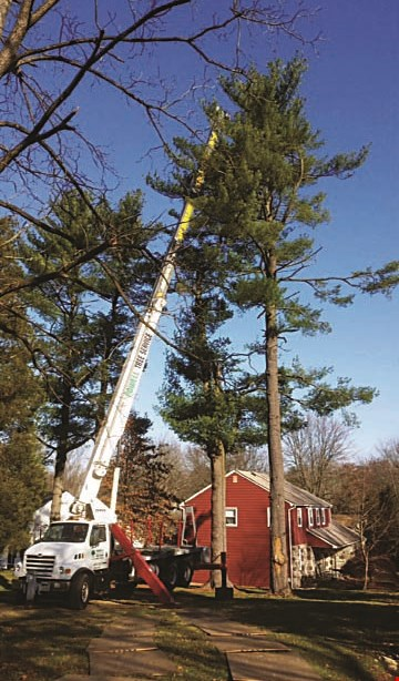 Product image for Powell Property Maintenance & Tree Service $100 off any services of $700 or more.