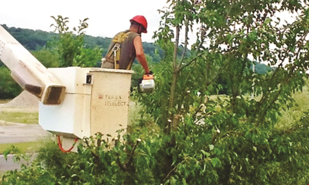 Product image for White Hills  Landscaping and Tree Service UP TO 40% Off Summer Savings.