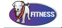 Stray Dog Fitness logo