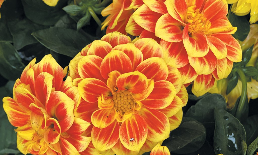 Product image for Farmer Stan's Plants & Produce 1 FREE FLOWER OR HERB PLANT with $10 purchase ($2.99 Value).