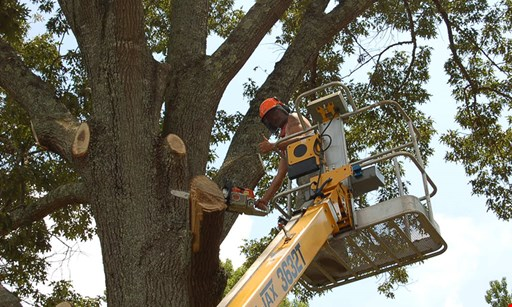 Product image for Busy Beaver Tree Service 15% off any job of $1000 or more