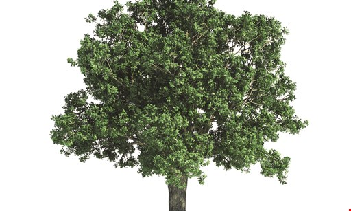 Product image for Forrest Tree Surgeons 10% Off Any Tree Service