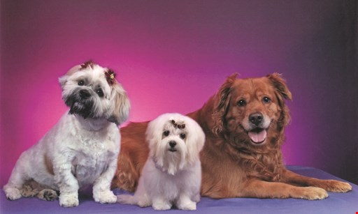 Product image for Terry's Top Dog Pet Salon $5 Off any full grooming service