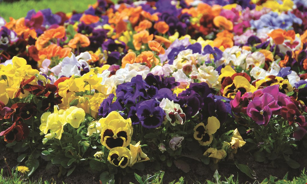 Product image for Burke Garden Centre $5 OFF Any Purchase of $50 or more.