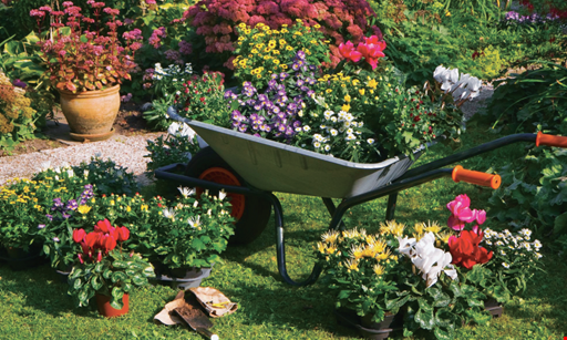 Product image for Knollwood Garden Center & Landscaping 20% off one item