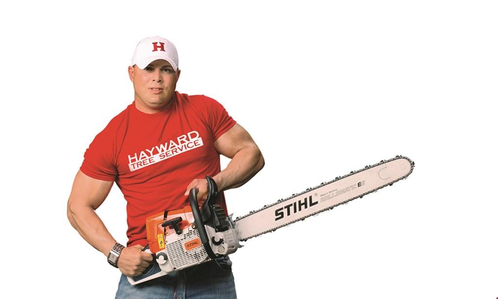 Product image for Hayward Tree Service $20 off Any tree service.