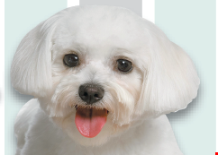 Product image for Kat's Dog House Grooming $5 off Regular Grooming Package. NEW CLIENTS ONLY