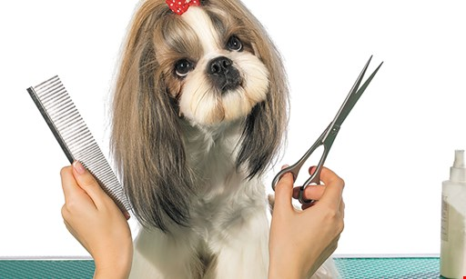 Product image for Old English Grooming 50% OFF first groom new customers only includes photo of your pet on FB.