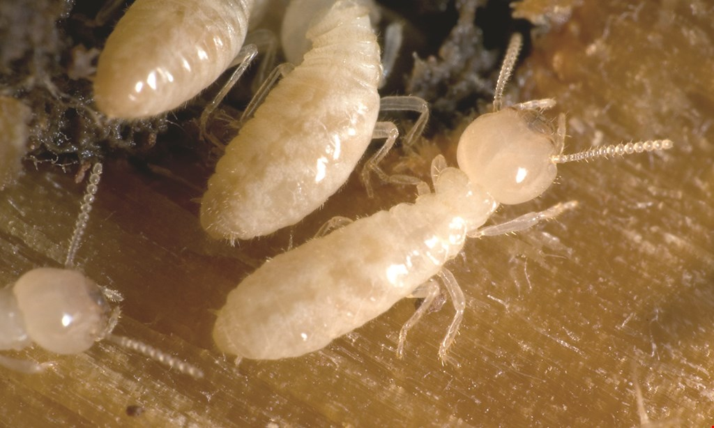 Product image for Key Termite and Pest Control $100 OFFfull termite treatments.