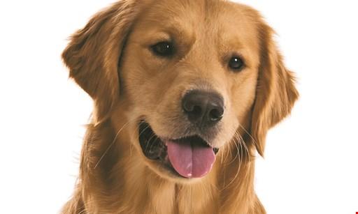 Product image for Canine Kingdom Free teeth brushing