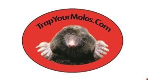 Trap Your Moles.Com logo