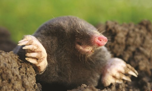 Product image for Trap Your Moles.Com 20% off Ground Mole Trapping Service