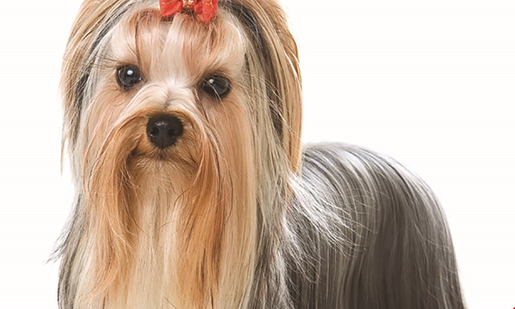 Product image for SHAMPOODLES PET GROOMING $5 off full grooming service for existing clients
