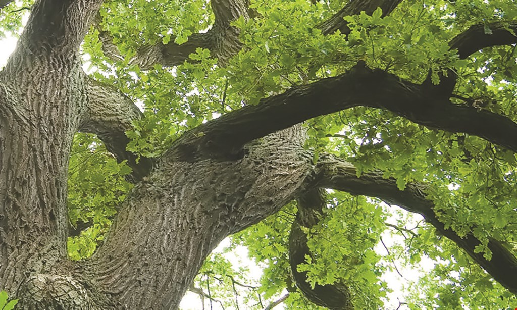 Product image for Solomon's Tree Service $200 off any tree removal service of $1000 or more.