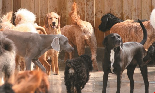 Product image for Animal Ark Pet Resort only $5/day. First 5 Days Of Doggie Daycare. Call Now For Appointment