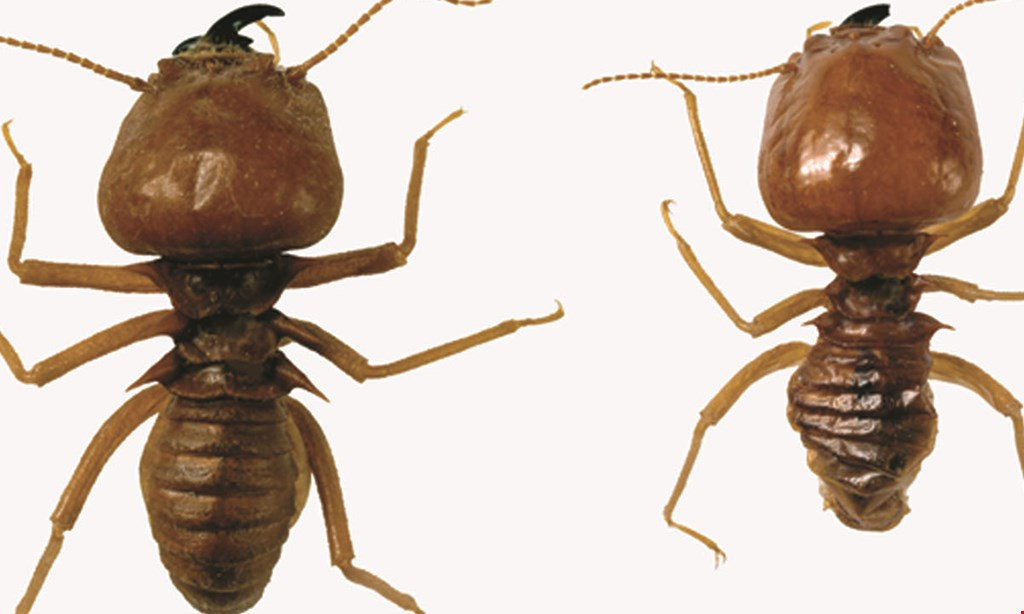 Product image for Select Pest Control $50 OFF Any Pest Control or Bed Bug Service.