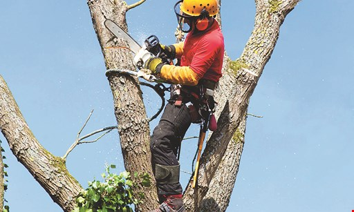 Product image for M and M Tree Service 10% OFF competitor's price w/ written invoice of competitor