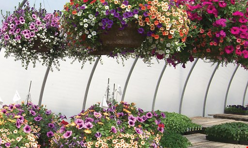 """Product image for Schuring's Greenhouse 20% off one 10"""" hanging basket"""