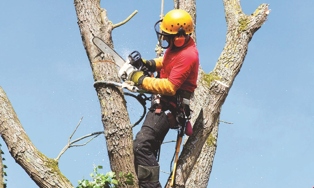 Product image for JT's Tree Service 10% Off if booked at time of estimate