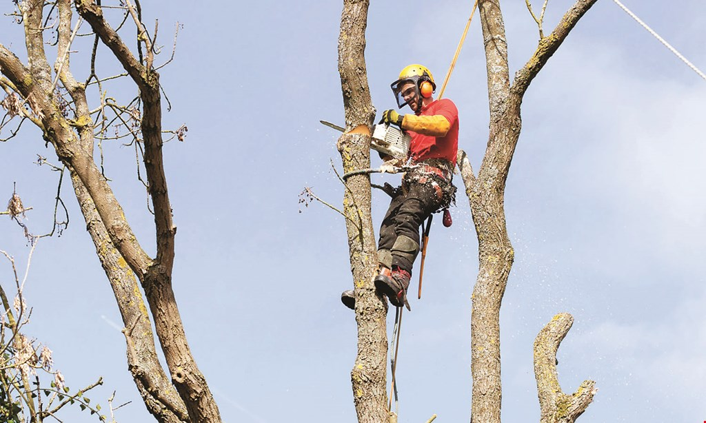 Product image for Team Smith Tree Service Inc 10% off any job of $400 or more