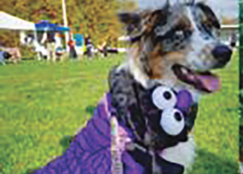 Product image for Pet Supplies Plus $5 off your purchase of $35 or more. Must be a Preferred Pet Club Member.