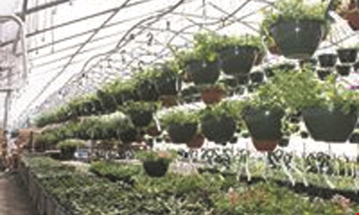 """Product image for Midline Greenhouses Buy 2 get 1 FREE perennials 4"""" pots."""