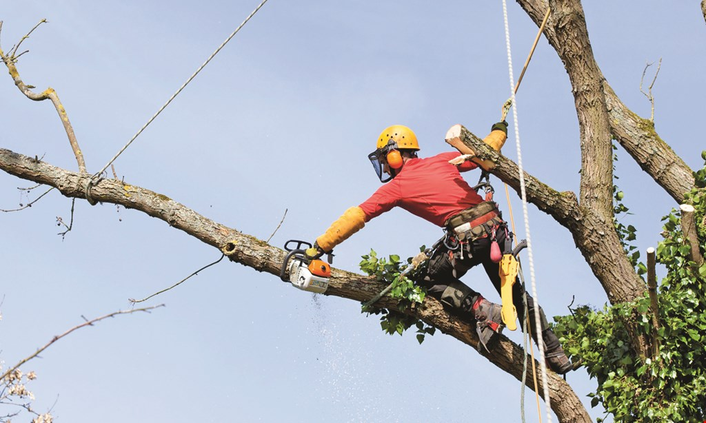Product image for Genesis Tree Service $250 off any job over $2350. $125 off any job over $1200. $50 off any job over $600. $25 off any job over $350.