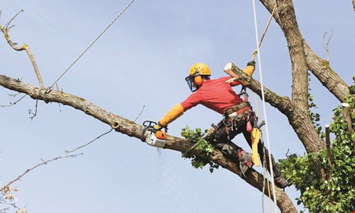 Product image for Genesis Tree Service $250 OFF any job over $2350, $125 OFF any job over $1200, $50 OFF any job over $600, $25 OFF any job over $350.