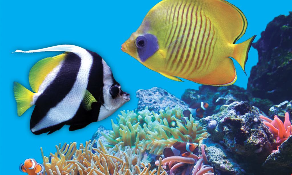 Product image for Fish Galore Critters & More $5 OFF any purchaseof $25 or more