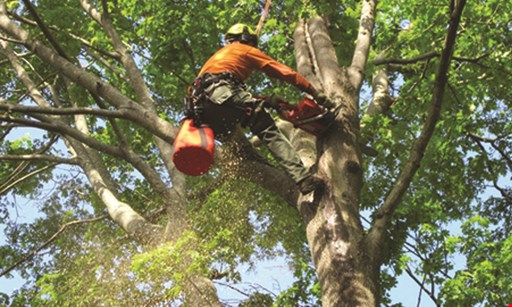 Product image for Enrique Tree Service 10% Off any tree removal
