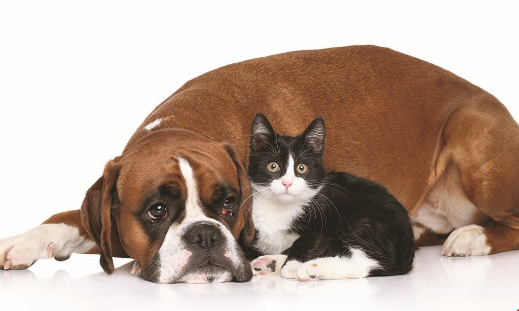 Product image for PET SUPPLIES PLUS 12% off any purchase.