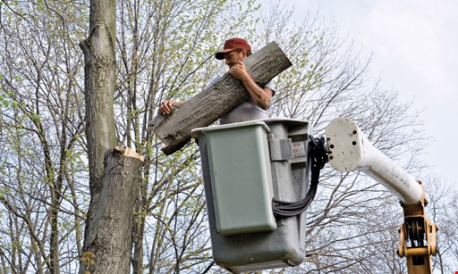 Product image for A S Tree Service $150 off any job over $1000.