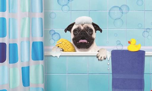 Product image for Cafe Du Bone Dog Bakery & Boutique 15% off any one regularly priced item