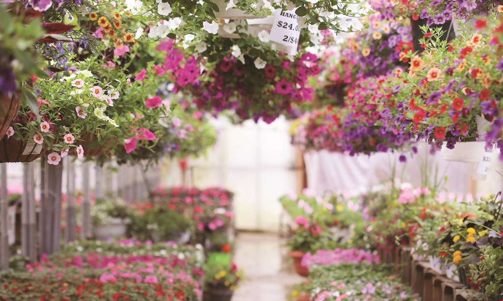 Product image for Glenmar Nursery 15% OFF any one tree, shrub or perennial.